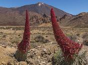 Ruta Tajinastes Rojos Valle Ucanca