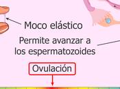 Cómo saber días fértiles test ovulación