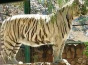 Zoológico Mexquitic pide ayuda; animales están quedando comida