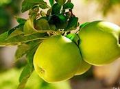 Pequeño ramillete manzanas