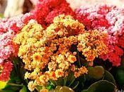 Pequeñímas flores amarillas rojas