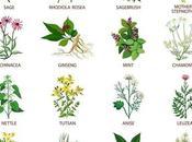 Cómo pueden ayudar Plantas Medicinales
