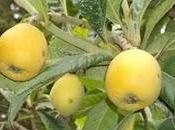 frutas adelantadas arboles frutales