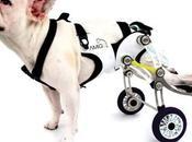 Dispositivo mantiene perros discapacitados independientes corriendo