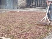 EthicHub comercializará café agricultores