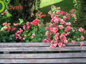 valor pequeños parques jardines