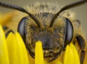 insectos peligrosos mundo