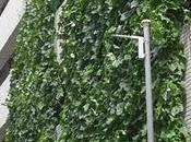Cortinas verdes Japón