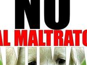 juzgado Córdoba considera delito arrojar perros gatos balcón, ocasionandoles muerte