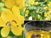Cassia Angustifolia, planta laxante natural para consumir como