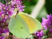 Mariposas flores verano