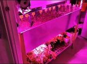 Huerto Urbano domotizado Alexa luces Full Spectrum