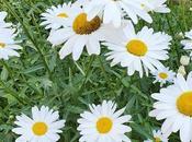 Fotos pecos@s: flores