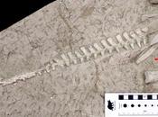 """Nuevo """"dragón dormido"""", nueva especie ornitópodo basal"""