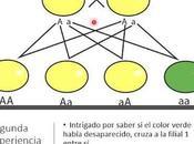Clase Leyes Mendel
