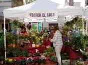 Pilar Horadada. Mercado Marinero Flores Verano 2011