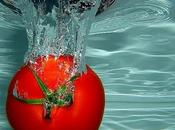 tomatal!!