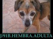 Pequeña viejita sacrifican perrera Reus ¡MUY URGENTE!