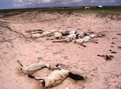 Somalia... ¿quién salva?