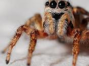 arañas pueden mejorar lentes contacto.