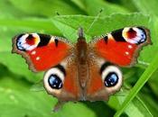 Mariposas, temporada