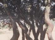árboles como simbología procesos vida