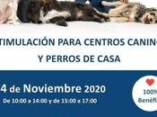 Estimulación para centros caninos perros casa
