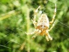 Arañas telas