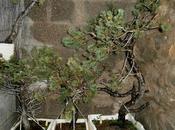 Bujin Silvestre gran paso