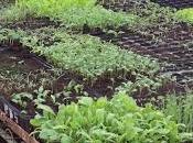 Siembra semillas semilleros