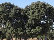 bosque mediterráneo flora mediterránea