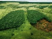 Amazonas, pulmón Madre Tierra