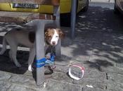 DENIS, cachorrito peludín abandonado atado banco. (Córdoba)