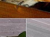 PIERDAS HOY: últimos días colirrojos tizones