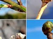 PIERDAS HOY: eclosión primeras yemas