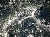 timidez árboles