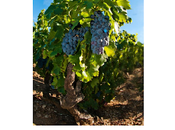 Vineyard: Side Quest Biblical Proportions, Sean Johnson