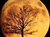 Luna integral