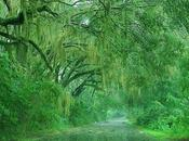 Ecosistemas (VI) Selvas Húmedas