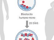 ético crear embriones híbridos