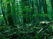 ¿Conoces Aokigahara? bosque suicidios, historia