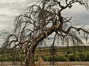 Viejo árbol circulación