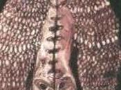 Cerberus Shoal Homb (1999)
