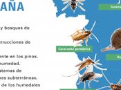España ratas cada habitantes