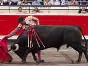 Toros encima toreros