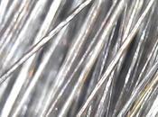 Piel pelos) bajo microscopio.