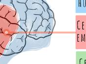 tres cerebros, Manu Medina