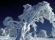 ¿Por nieve blanca?