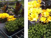 ideas para vuestros jardines