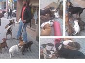 Indigente maltrata perros barcelona vista todos!! actúa